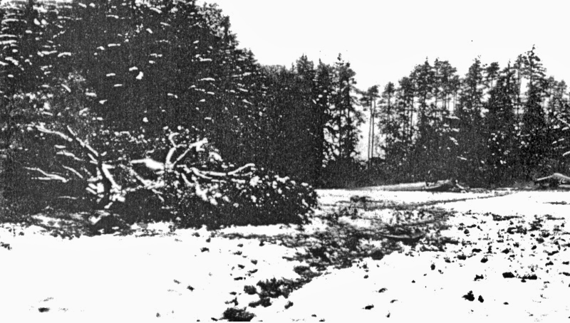 Absturzstelle der He-111 bei Kemleten. Links die geköpfte Krone des Birnbaumes. (7_1)
