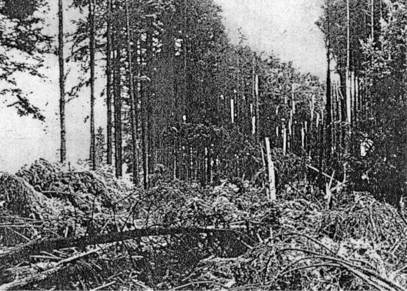Bei seinem Absturz bei Fehraltorf riss die B-24 eine etwa 200 Meter lange Schneise in den Wald. (134_1)