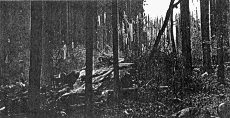 Die B-24 hatte eine grosse Schneise in den Wald geschlagen. (147_2)