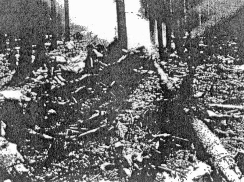 Die Absturzstelle im Wald bei Prestberg. (168_1)
