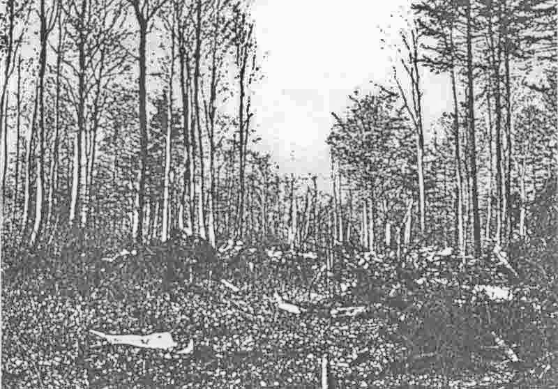 Beim Absturz riss die Maschine eine Schneise in den Wald. (409_1)